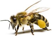 Méhesház Hajdúszoboszló